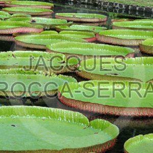 photo-ile-maurice-toile-M22-small