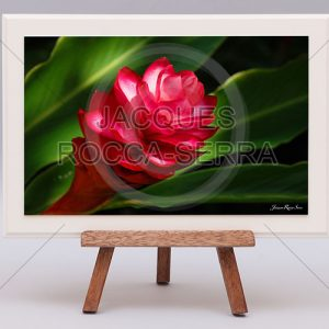 rectangle-de-lumiere-photo-ile-maurice-RL-M-MF26-small