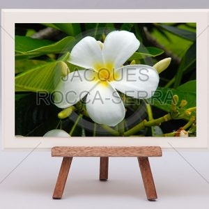 rectangle-de-lumiere-photo-ile-maurice-RL-M-MF29-small