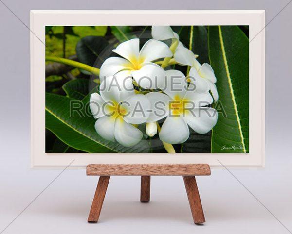 rectangle-de-lumiere-photo-ile-maurice-RL-M-MF30-small